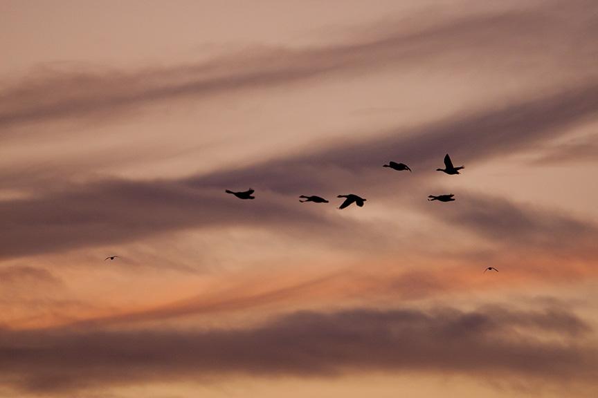sunset-flyout-v1-bwr_80i7842