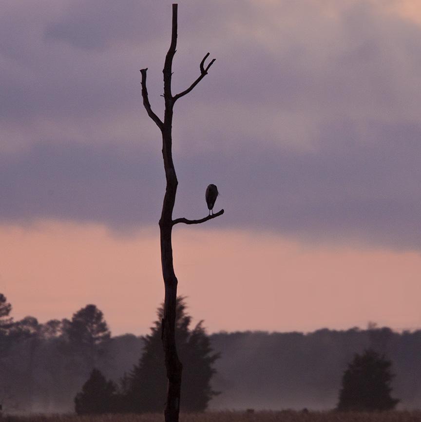 sunset-ge-tree-v3-bwr-80i7775