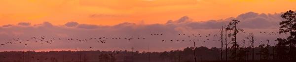 sunset-v3-bwr_80i757a6