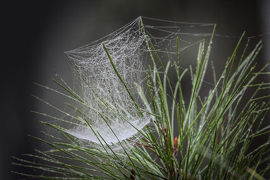 bwr-cobweb-v2_80i7973