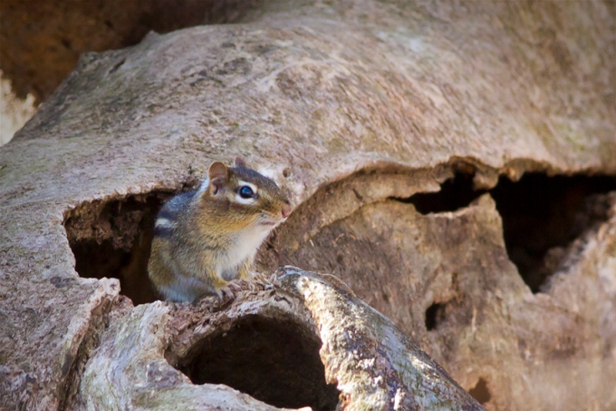 pp-chipmonk-home-v5_mg_0397