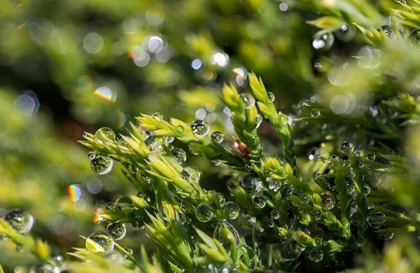 RainDrops 19_img
