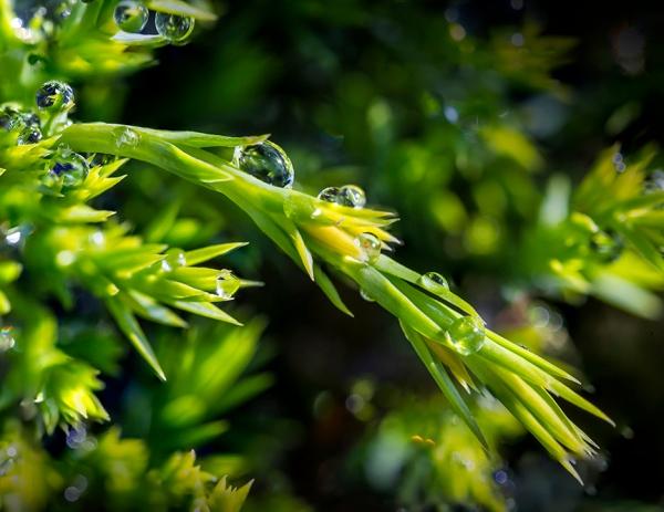 Raindrops stk_4_10img v2