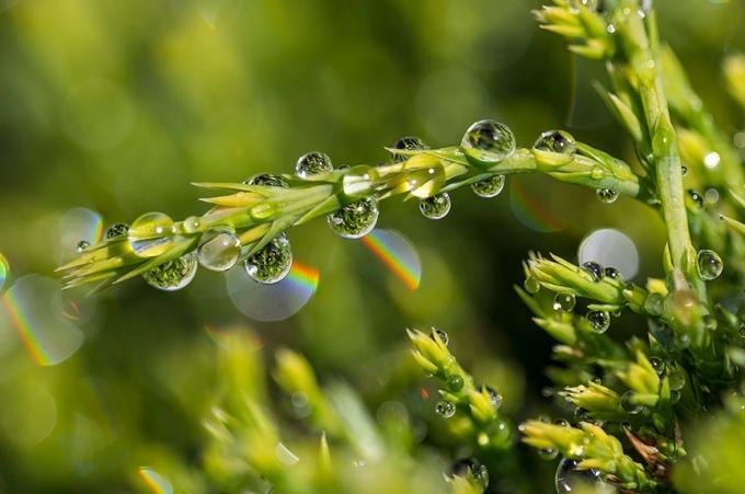 Raindrops_22b 3img