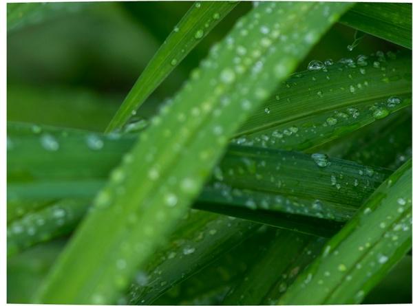 RainDrops_3_8img stk lay8