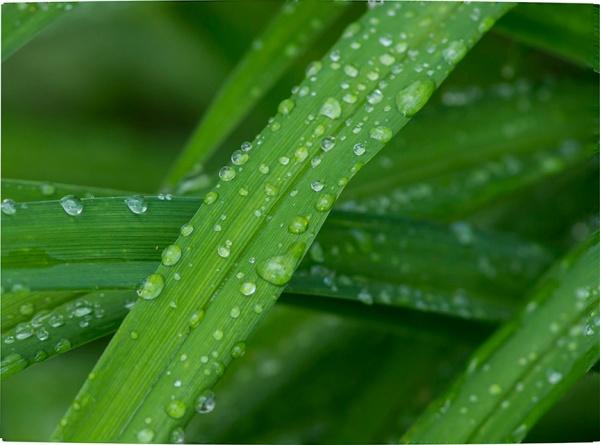 RainDrops_3_8img stk v1 lay1