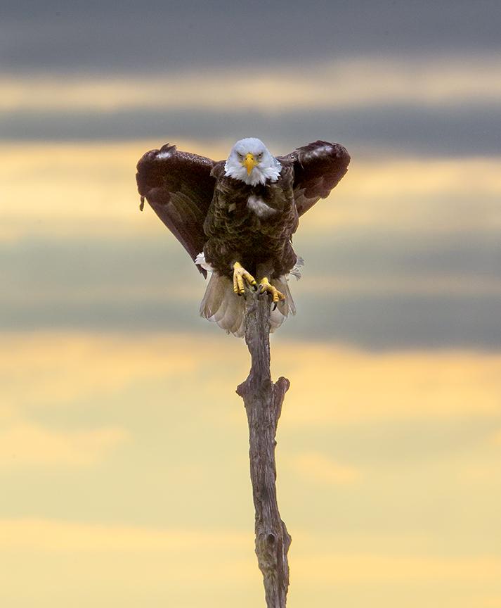 Eagle BWR v6_43G0354