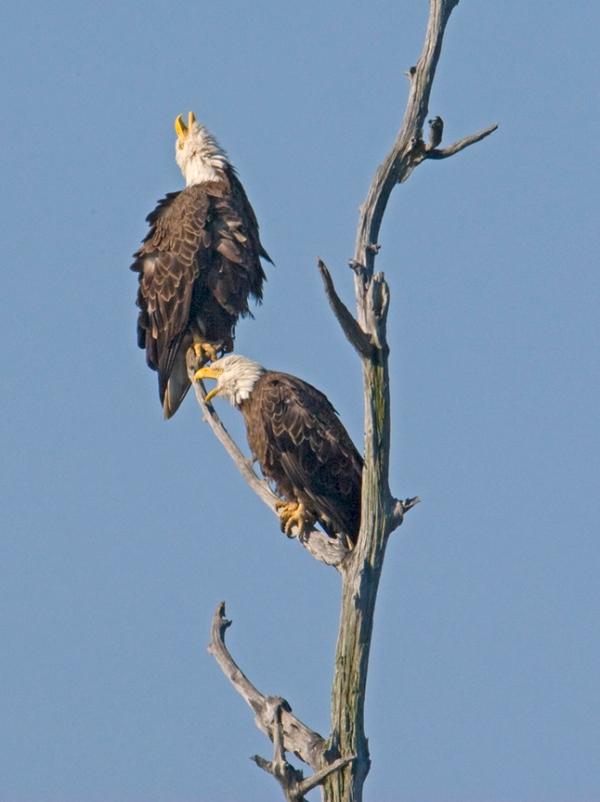 Eagles BWR_MA_1587a v2