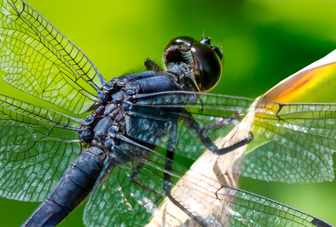 SlatyBlue_Dragonfly_v2 4img_stk_DM_7_!&