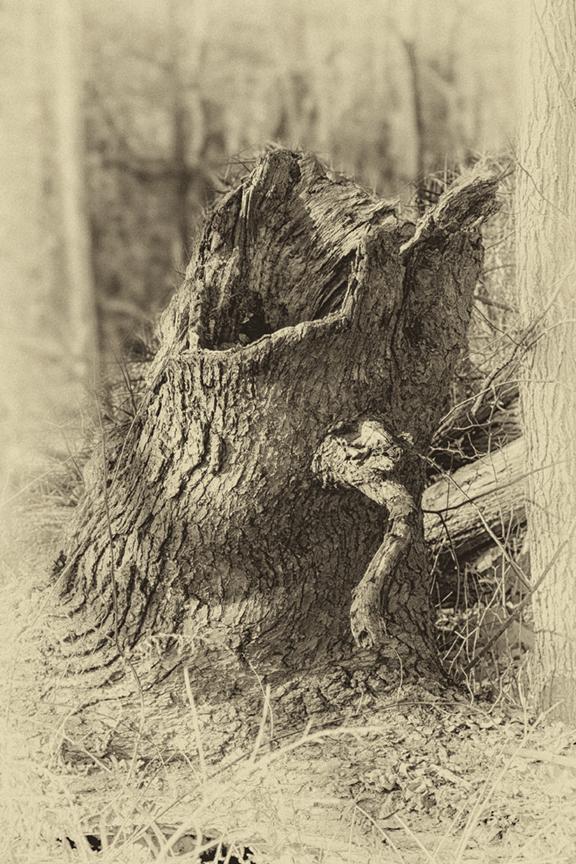 Screaming Tree Stump DM 18 v7 daguerreotype_43G0835
