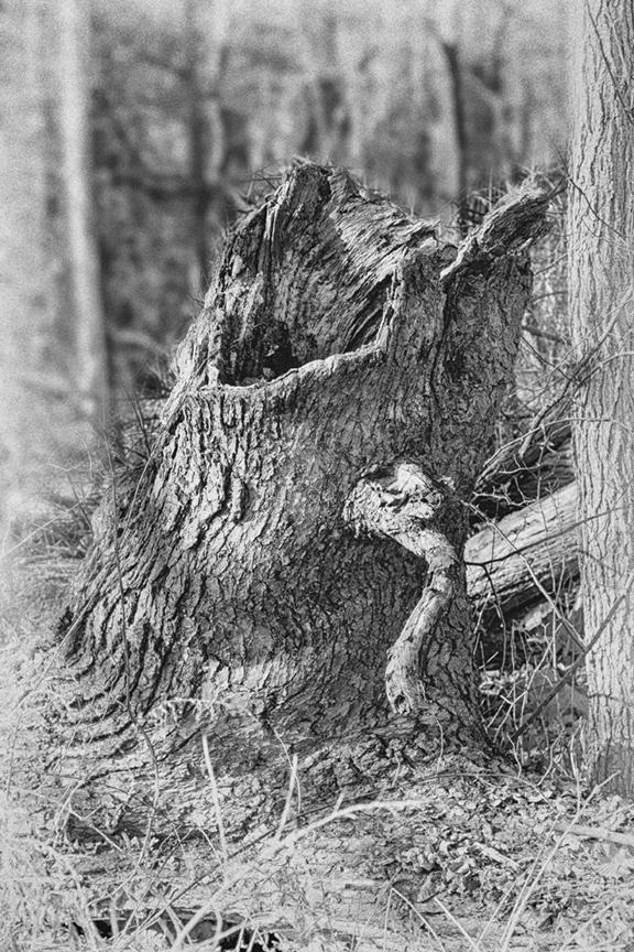 Screaming Tree Stump DM 18 v7 silver efx_43G0835