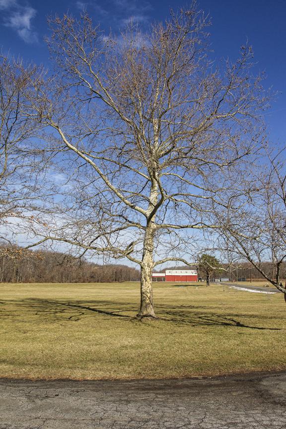 Winter Trees DM v2 1 18_43G0858