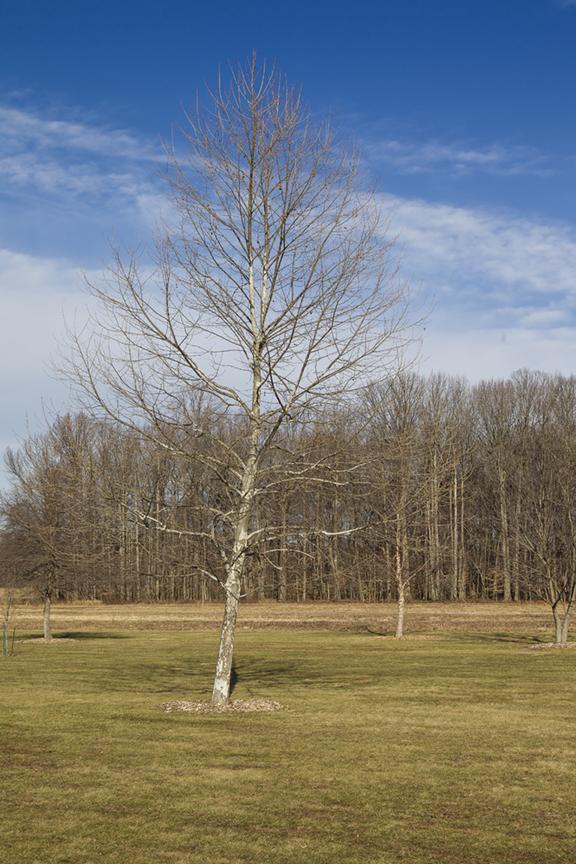 Winter Trees v1 DM 1 18_43G0850