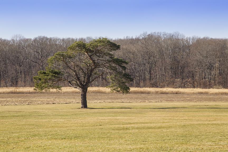 Winter_Trees_DM v1 1 18_43G0854