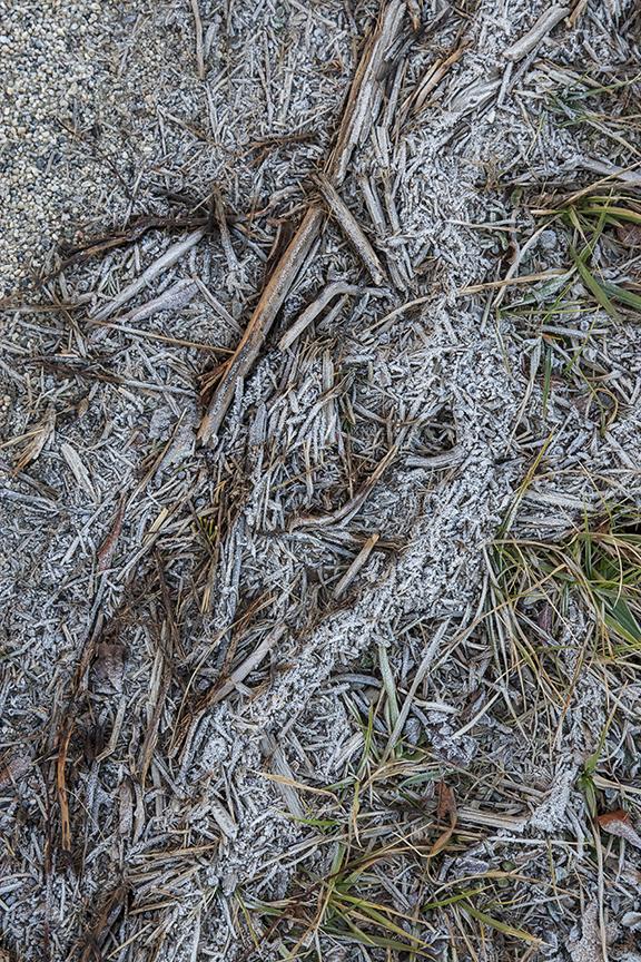 Hoary Frost v1 Brig 1 18_MAL0281