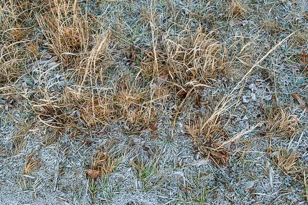 Hoary Frost v1 Brig 1 18_MAL0290