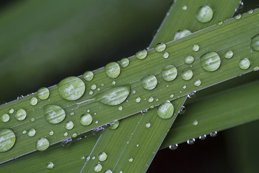 water drops leaf_MG_7897