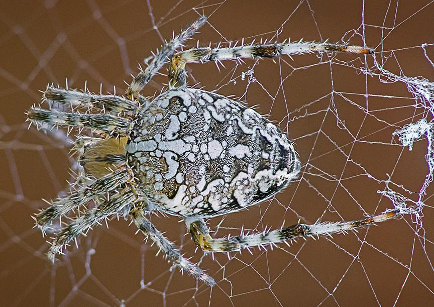 Spider 6 img stk m43 200mmFD v2