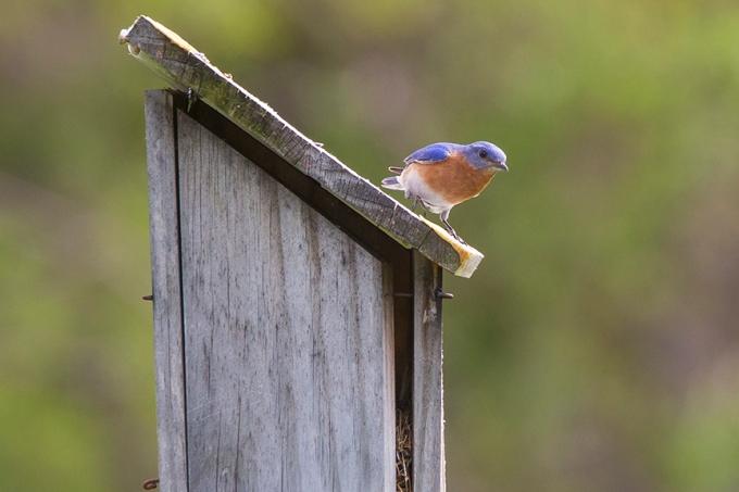 Blue Bird_v2_DM18_43G7034