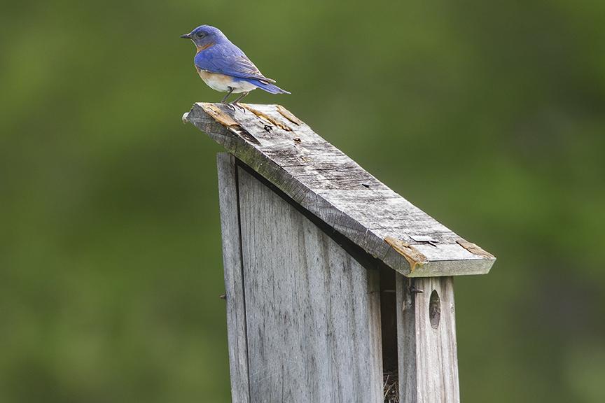 Blue_Bird_v2_DM18_43G7062