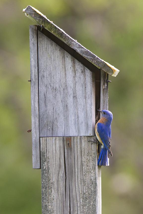 BlueBird House_v3_DM18_43G7023