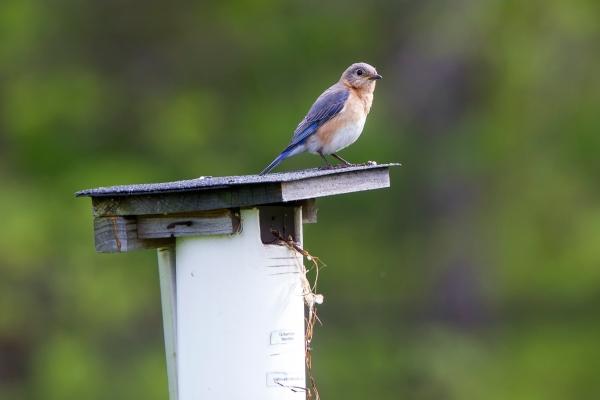 BlueBird v1 DM 18_43G7006