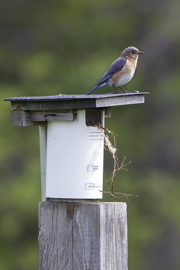 BlueBird v2 DM 18_43G6989