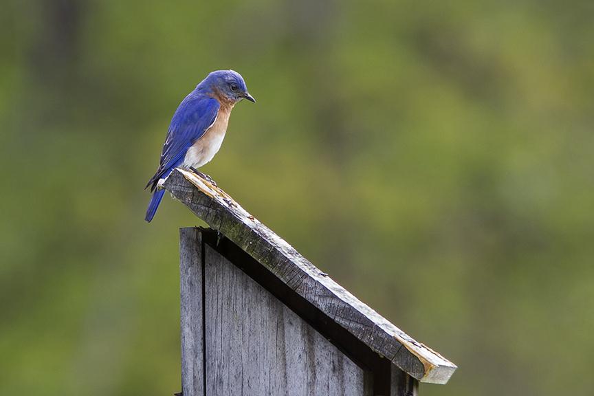 BlueBird v2 DM 18_43G6991
