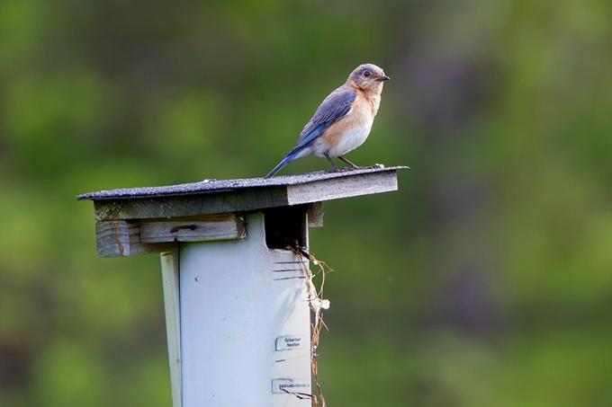 BlueBird v2 DM 18_43G7006