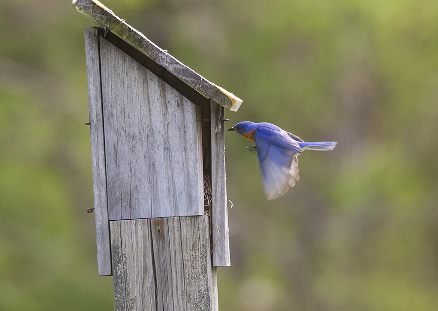 BlueBird_incoming_v1_DM18_43G7038