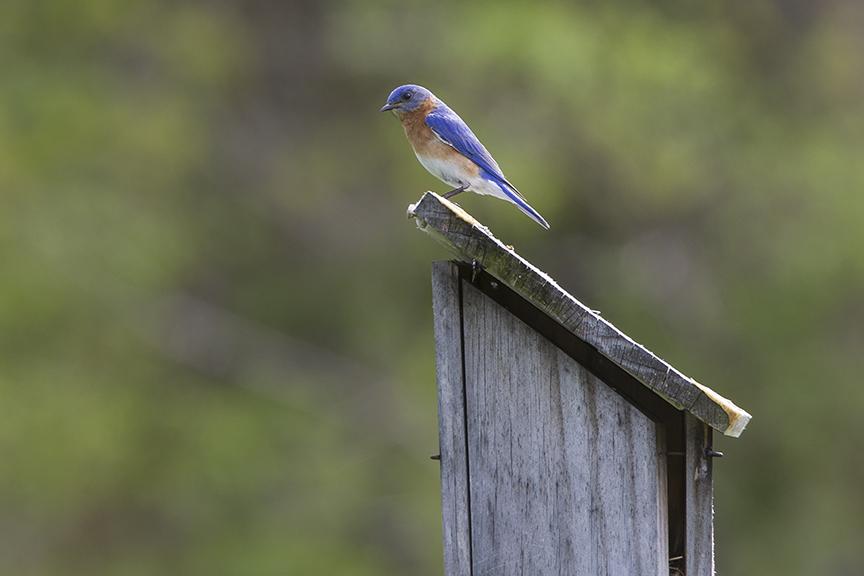 BlueBird_v3 DM 18_43G7001