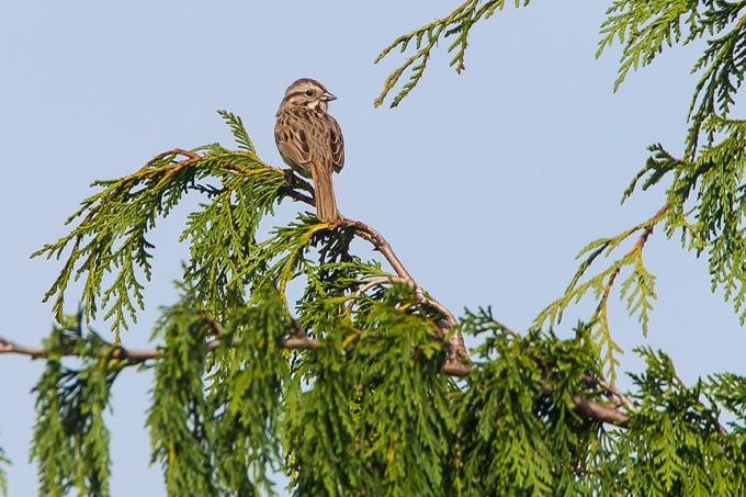 Sparrow v1 DM18_43G6787