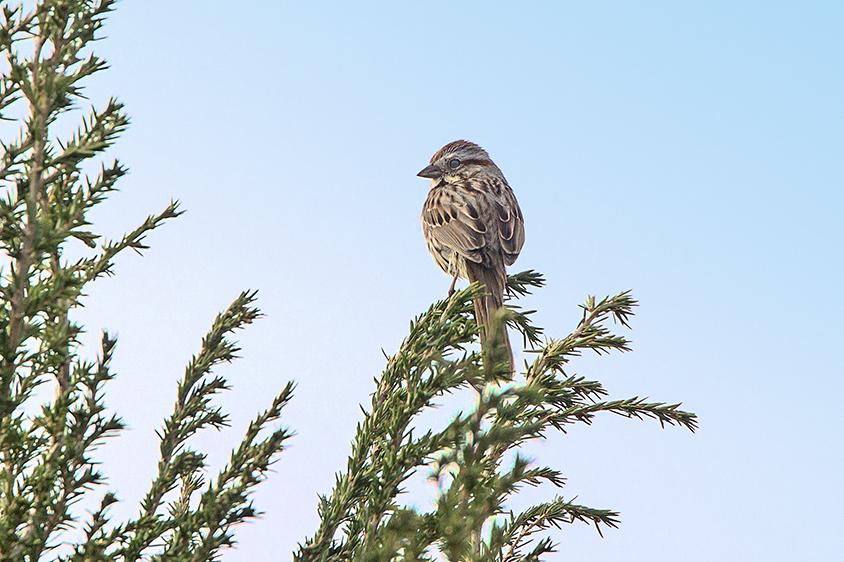 Sparrow v3_DM18_43G6725