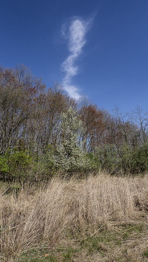 Tree Clouds v2