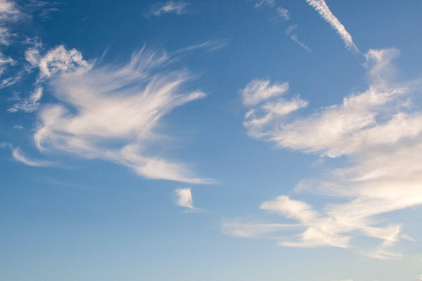 Bird_Clouds_80I9564