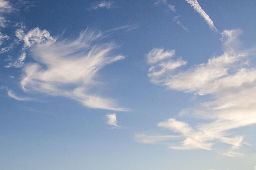 Bird_Clouds_80I9564