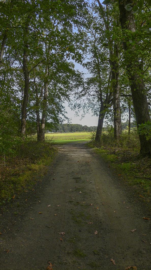 DM Woods_P1060516