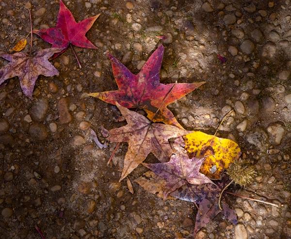 DM_Fall_leaves_woods_v2_1450755