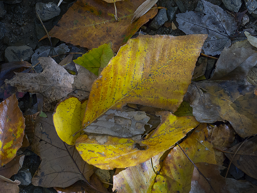 DM_Walk_Leaves_v2_1450780