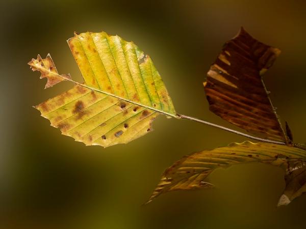 DM_Weathered Leaf_v3_11_18_1450725