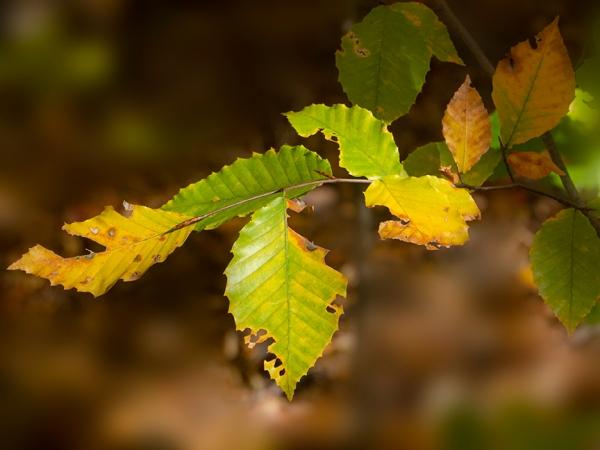 Fall_leaves_v1_1450717