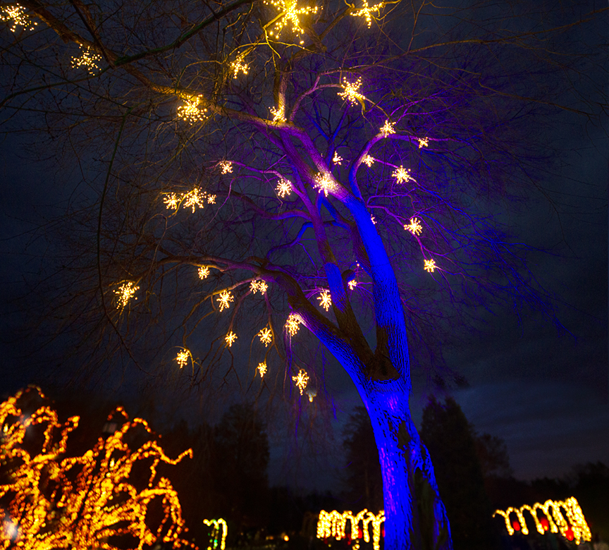 Night_Lights_3img Blnd_12mm_43G0851