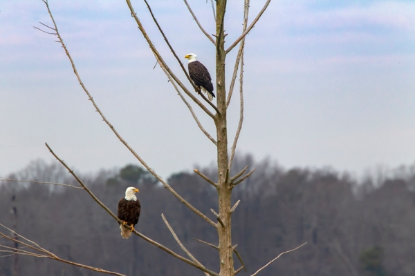 _eagles_v3_bwr_12_18_800mm_43g4182
