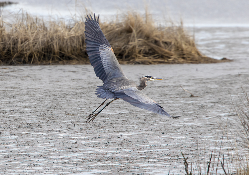 GBH_Winging_Away_v1_76A1626