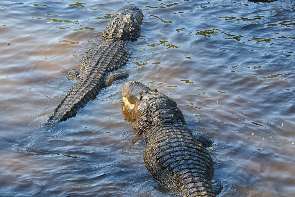 Alligators_Protectors_v1_150mm_4_19_AF_076A9598