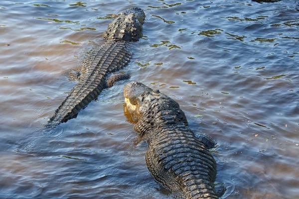 Alligators_Protectors_v1_150mm_4_19_AF_076A9598