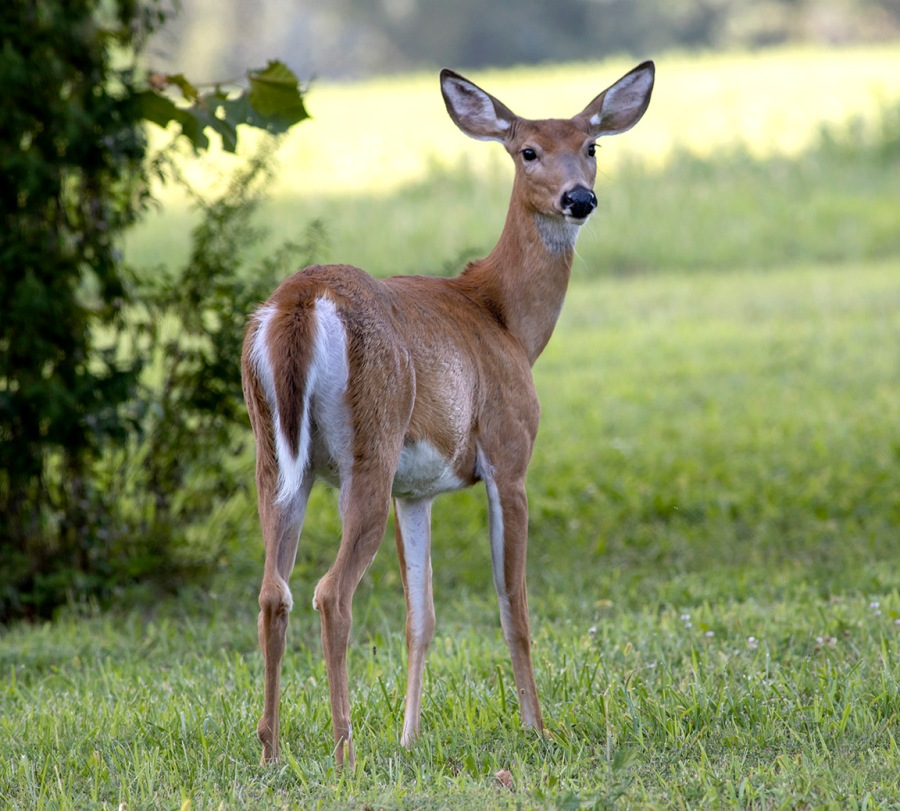 Doe_v2_PP_600mm_2img_pano_v2_8 19