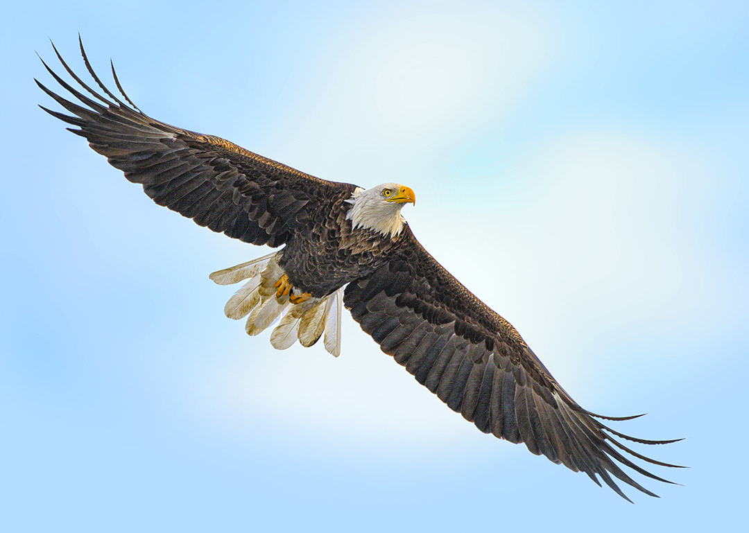 eagle v9 copy
