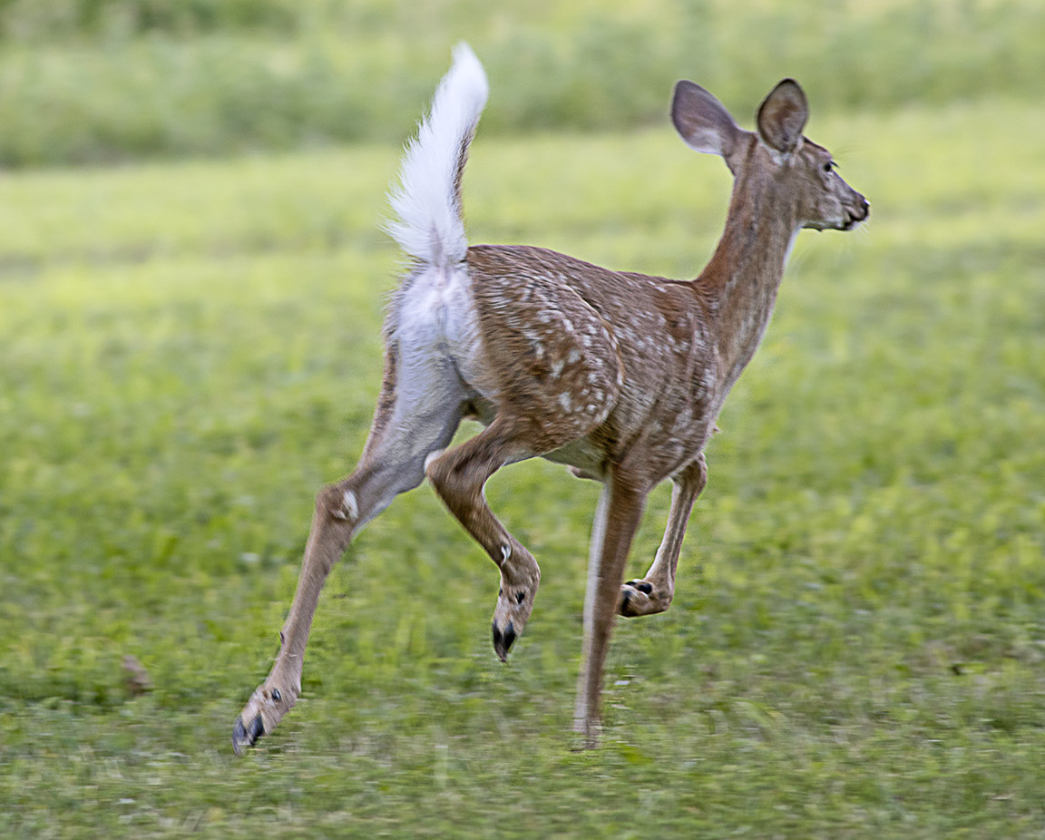 Fawn_v1_PP_8_19_76A5843