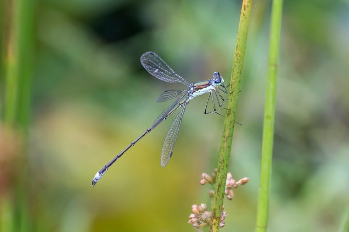 Damselfly v2a DM 7 18 _HP 43G9950